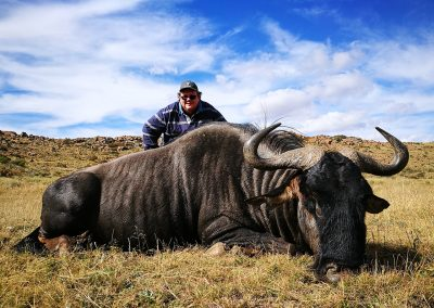 Richard-blue-wildebeest