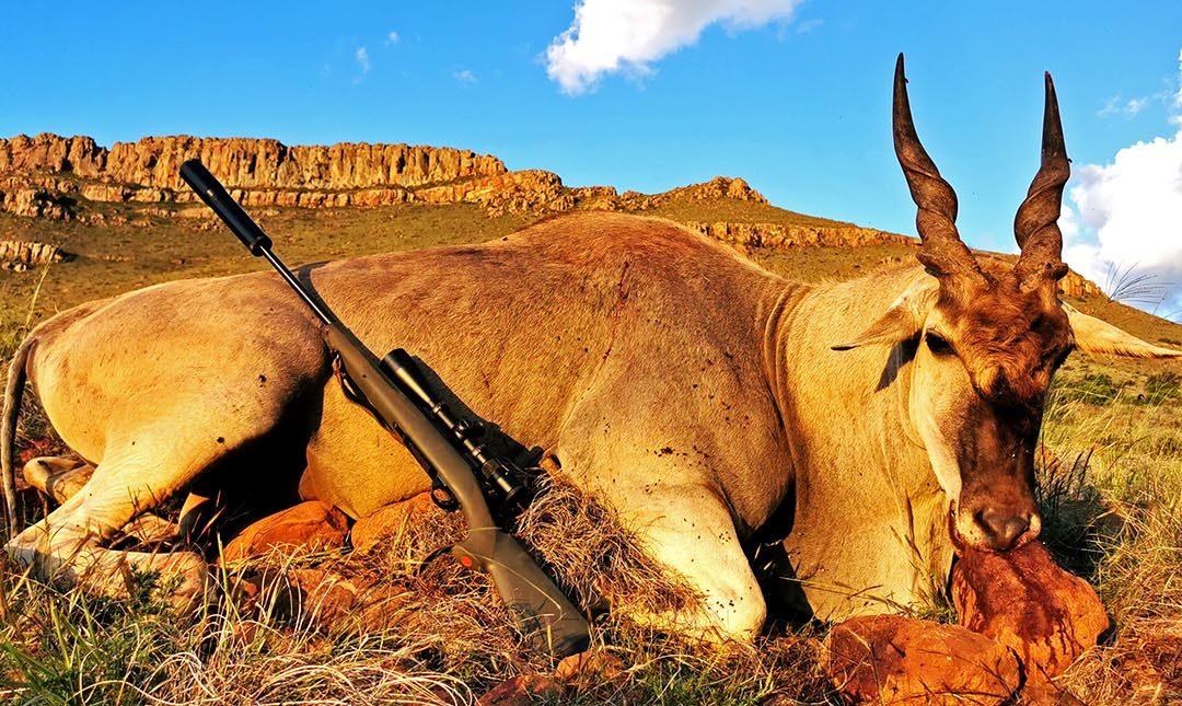 Plains Game Hunt LJ Safaris